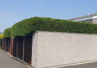 hedge pruning and laying bristol