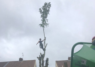 Tree removal chepstow