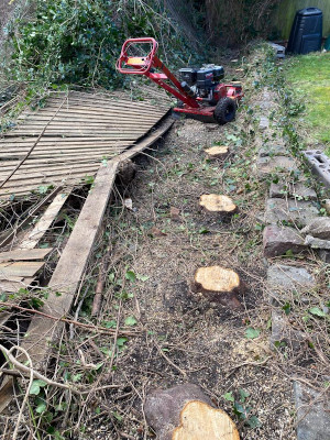 stump removal Chepstow before